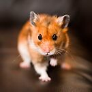 A hamster called Ratty by Robert Down