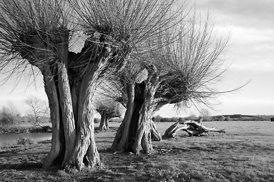 Whomping Willows by Christopher Cullen