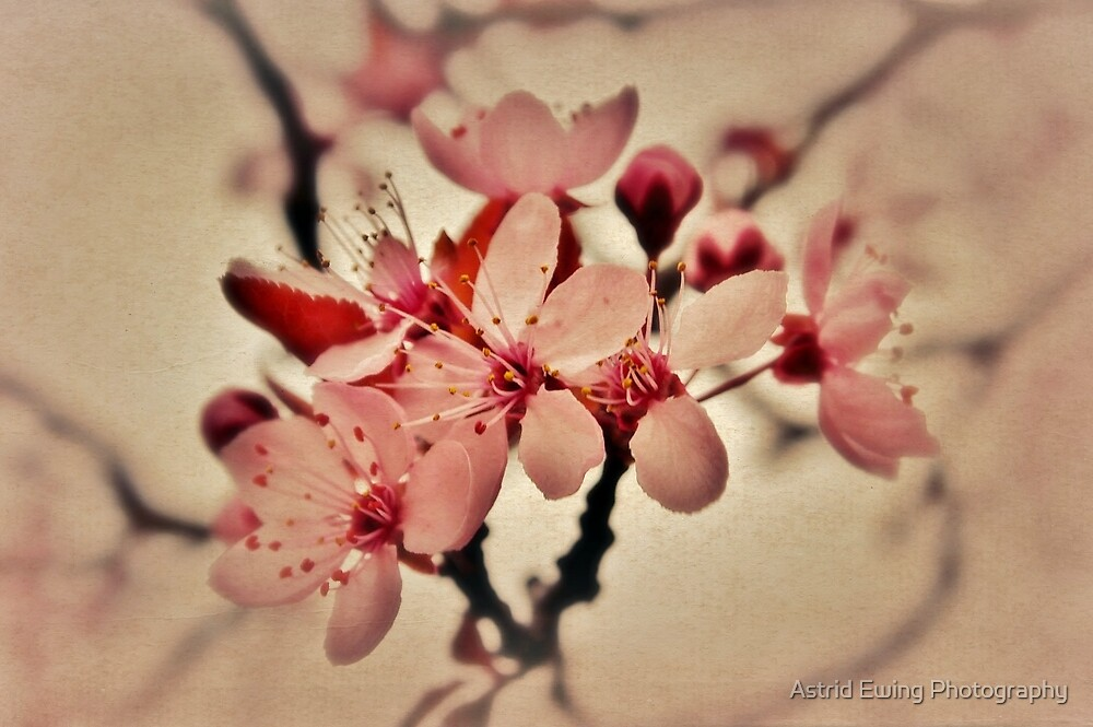 Burgeoning Blossom by Astrid Ewing Photography