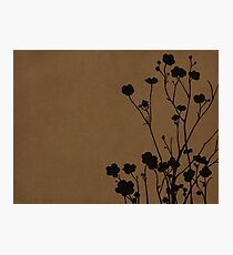 Buttercups in Brown & Gray Photographic Print