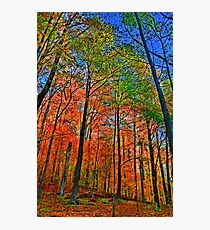 """ Camillus Forest - Upstate NY "" Photographic Print"