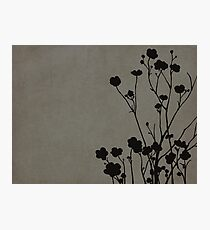 Buttercups in Gray Photographic Print