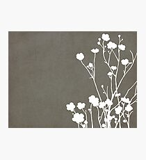 Buttercups in Gray & White Photographic Print
