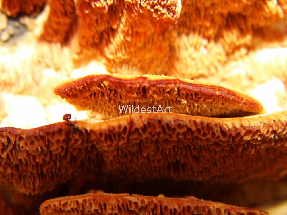 Wild Fungus by WildestArt