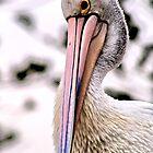 Pelican by Paul Sparrow