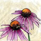 Echinacea 2 by Barbara Glatzeder