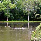 willowbrook park pond by deegarra