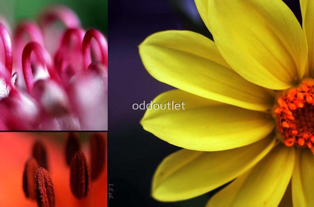 Flower palet by oddoutlet