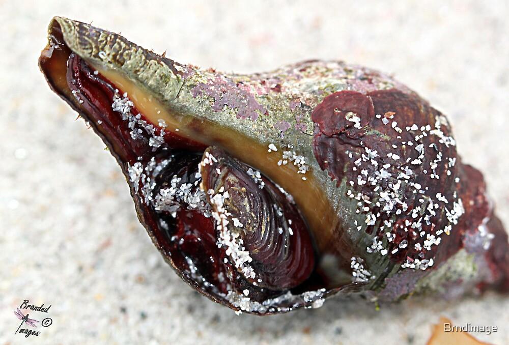 Sea Shell in detail by Brndimage