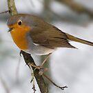 SONGBIRD by mc27