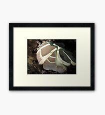 Craked Top Framed Print