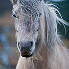 Highland Horse by Mark Hughes