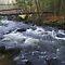 A Stream/River in the Wild