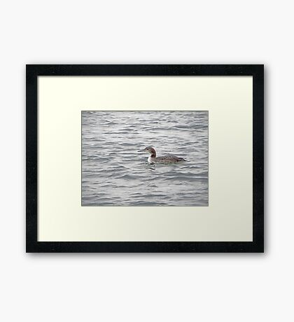 A Loon of Wisconsin Framed Print