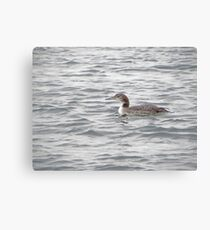 A Loon of Wisconsin Canvas Print