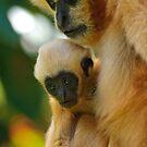 White-Cheeked Gibbon by Daniel Attema