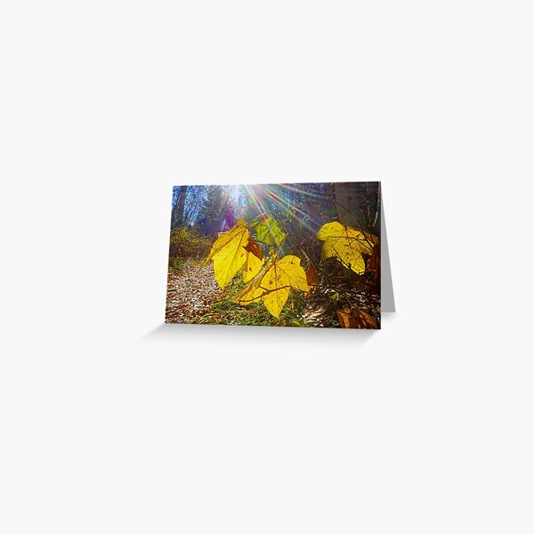 Fall Leaves in Iller Creek Greeting Card