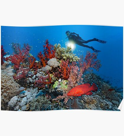 Reef Adventure Poster