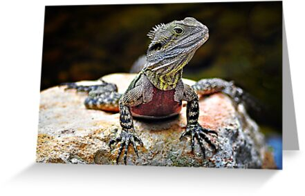 Water Dragon by Tracie Louise