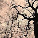 Twisted Branches Reaching To The Sky by Jane Neill-Hancock