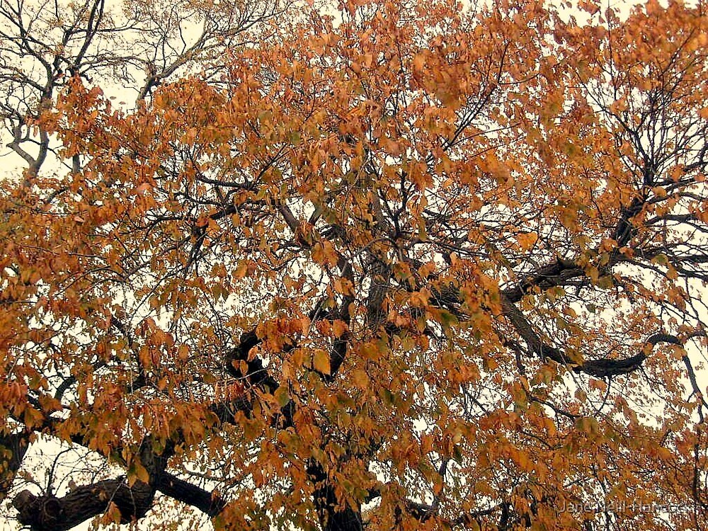 Golden Leaves on Twisted Branches by Jane Neill-Hancock