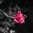 Flower. by ACACrown