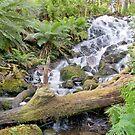Cora Lynn Falls by mspfoto