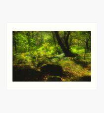 Dart Valley Woods Art Print