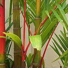 Red Palm by Sharra Schwartz