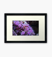 Macro anemones Framed Print
