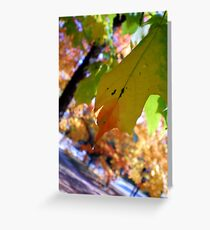 Stunning Solitare Greeting Card