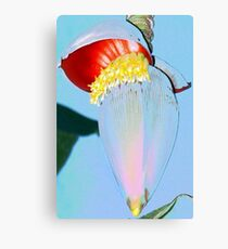 Orange banana flower Canvas Print