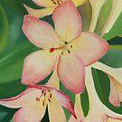 Light Pink von Graeme  Stevenson