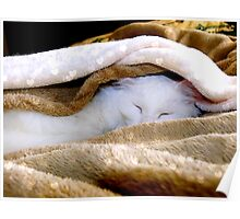Sleeping under the warm blanket Poster