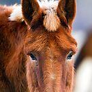 Sweetness in an mule by amontanaview