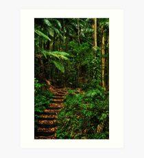Wollumbin rainforest green path Art Print