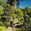 Bonsai, Japanese Tea Garden by SusanAdey