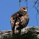 Eagle Eyed by John Dalkin