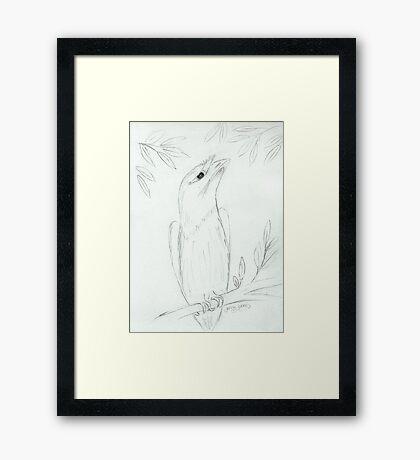 Tawny Frogmouth Sketch Framed Print