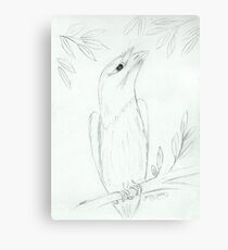 Tawny Frogmouth Sketch Canvas Print