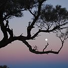 dusky moon by outsider