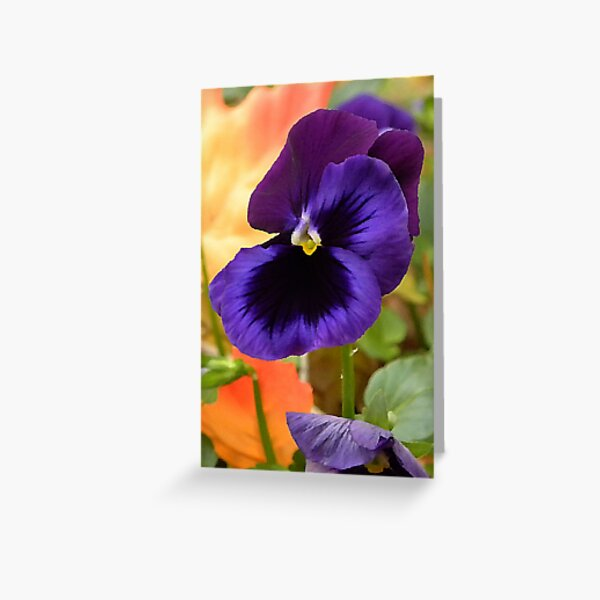 Painted Pansey Greeting Card