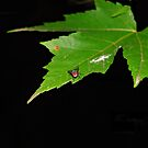 The Leaf by Grinch/R. Pross