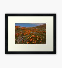 Desert Poppies Framed Print