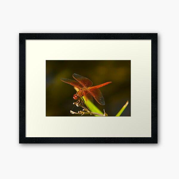 Orange Dragonfly Framed Art Print