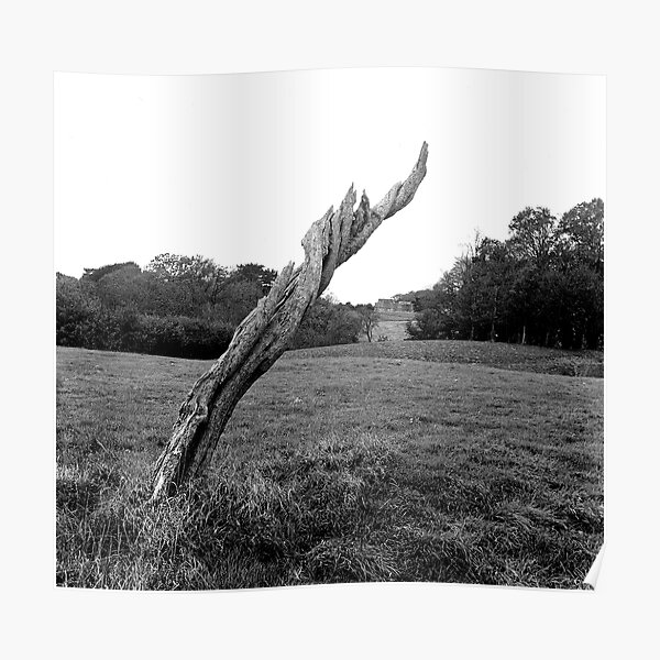 Tree Stump, Phoenix Park, Dublin Poster
