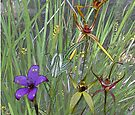 Margaret River Orchids with Grasses by Leonie Mac Lean