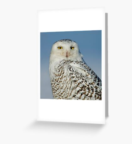Snowy at Amherst  Greeting Card