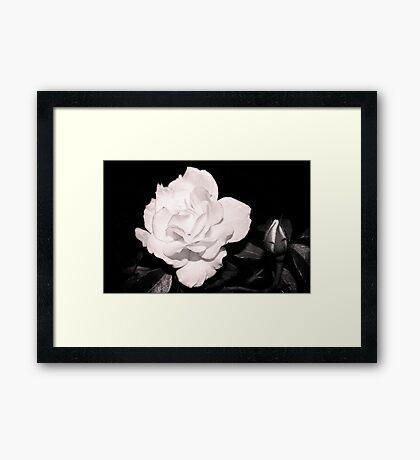 Night Roses Gerahmtes Wandbild
