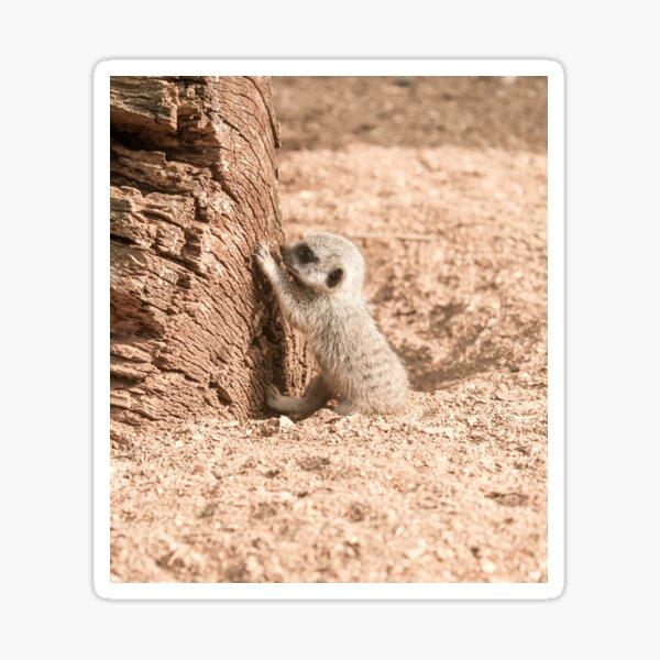 Meerkat Pup Photography Sticker